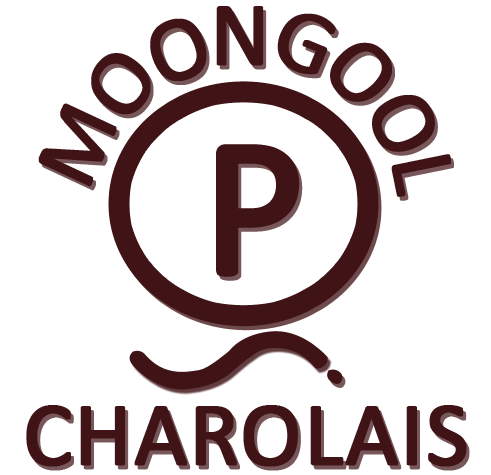 Moongool Charolais